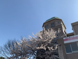 満開の桜 今年も埼玉平成に